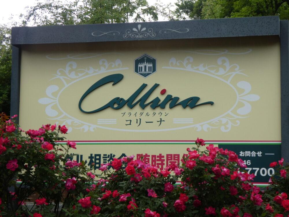 いわき市 バラ園おすすめスポット ブライダルタウン コリーナ