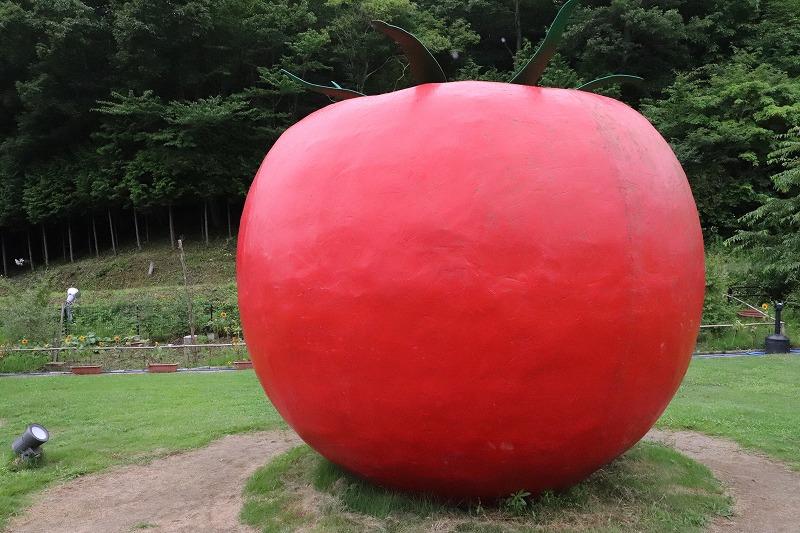 ワンダーファームで「田んぼアート・ひまわり」見て「グルメ・おすすめランチ」を食べてきました!