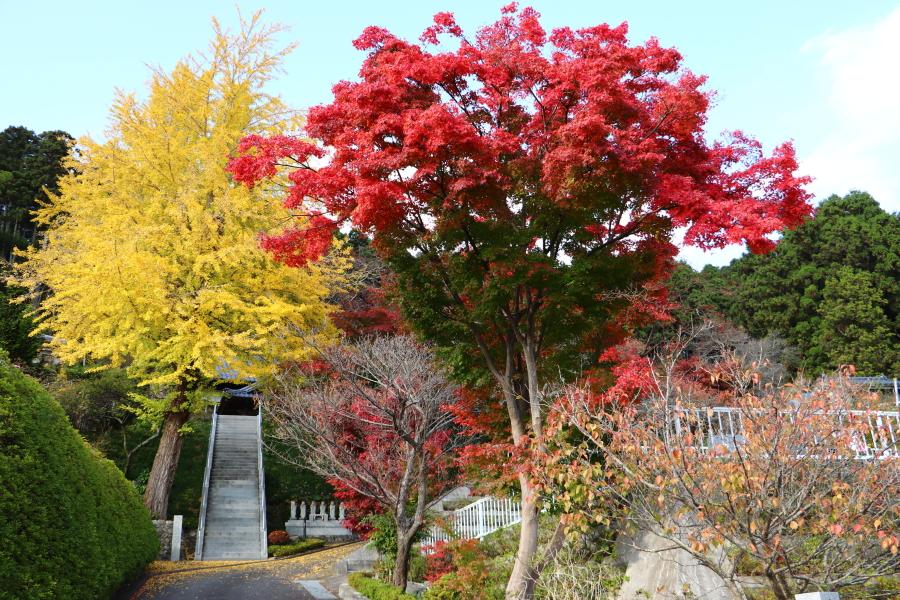 いわき市おすすめ紅葉スポット!湯本町「梅林寺の銀杏・紅葉」と「銀杏並木集」
