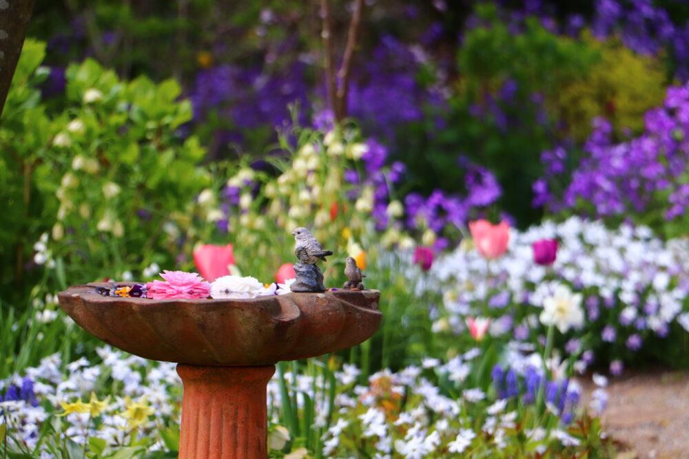 いわき市 春爛漫 湯本「ガーデンカフェ花遊庭」が再オープン!綺麗な花々が満開に咲いてます!