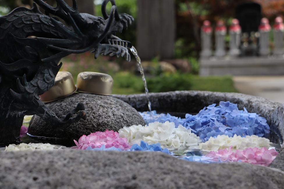 いわき市入遠野 円福寺「花手水」の紫陽花が素晴らしく綺麗でした! 雨引観音はどうなんだろう?