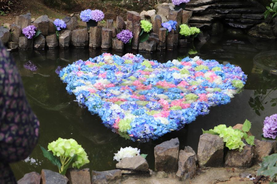 2021年7月 茨城県「雨引観音」紫陽花がお見事!孔雀も綺麗におめかし(笑)