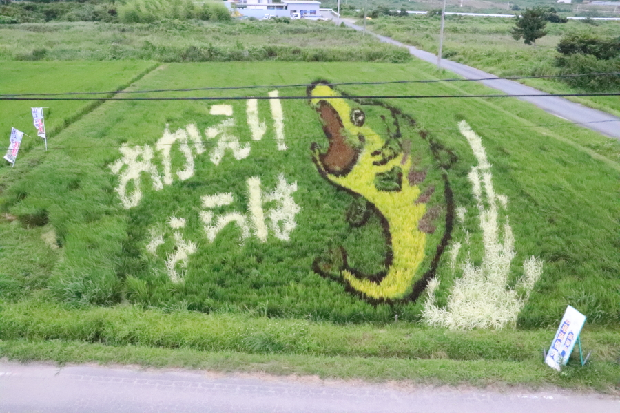 もう見ましたか?2021年8月 いわき市「ワンダーファーム内」楢葉町「田んぼアート」を見てきました。